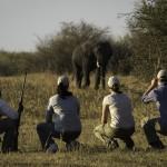 Linyanti Camp - Walking Safari