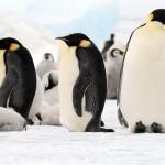 Emperor Penguin Trip in Antarctica