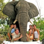 Elephant Interaction, Stanley's Camp