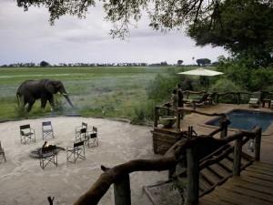 Elephants at Tubu Tree Camp