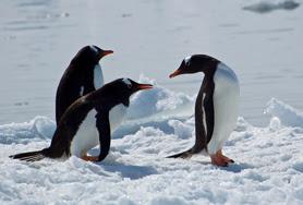 antarctica-1