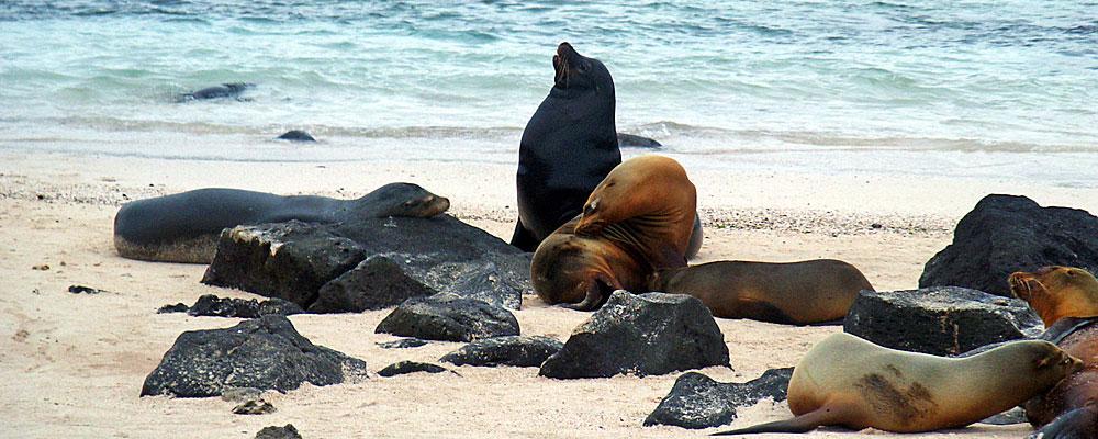 Galapagos Cruise Specials 2015