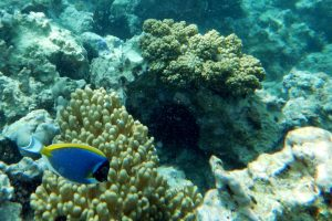 Scuba Diving in Zanzibar