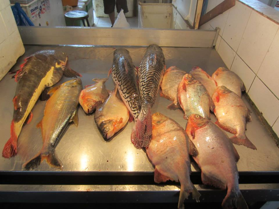 Manaus brazil s gateway to the amazon adventures within for Local fish market