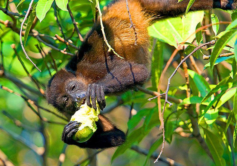 /wp-content/uploads/itineraries/Costa-Rica/lagarta-lodge-monkey-1.jpg