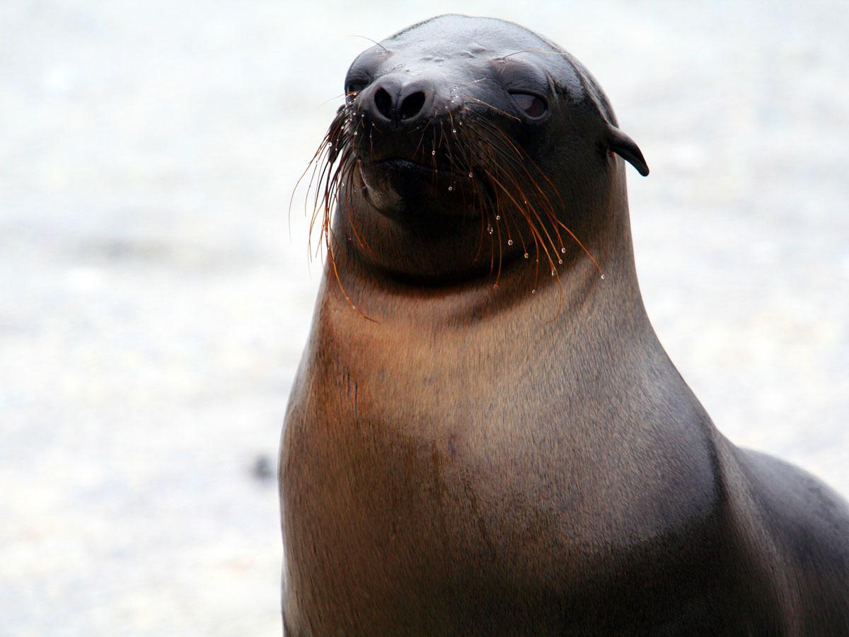/wp-content/uploads/itineraries/Galapagos/032310galapagos_espinosa_sealions-(11).jpg