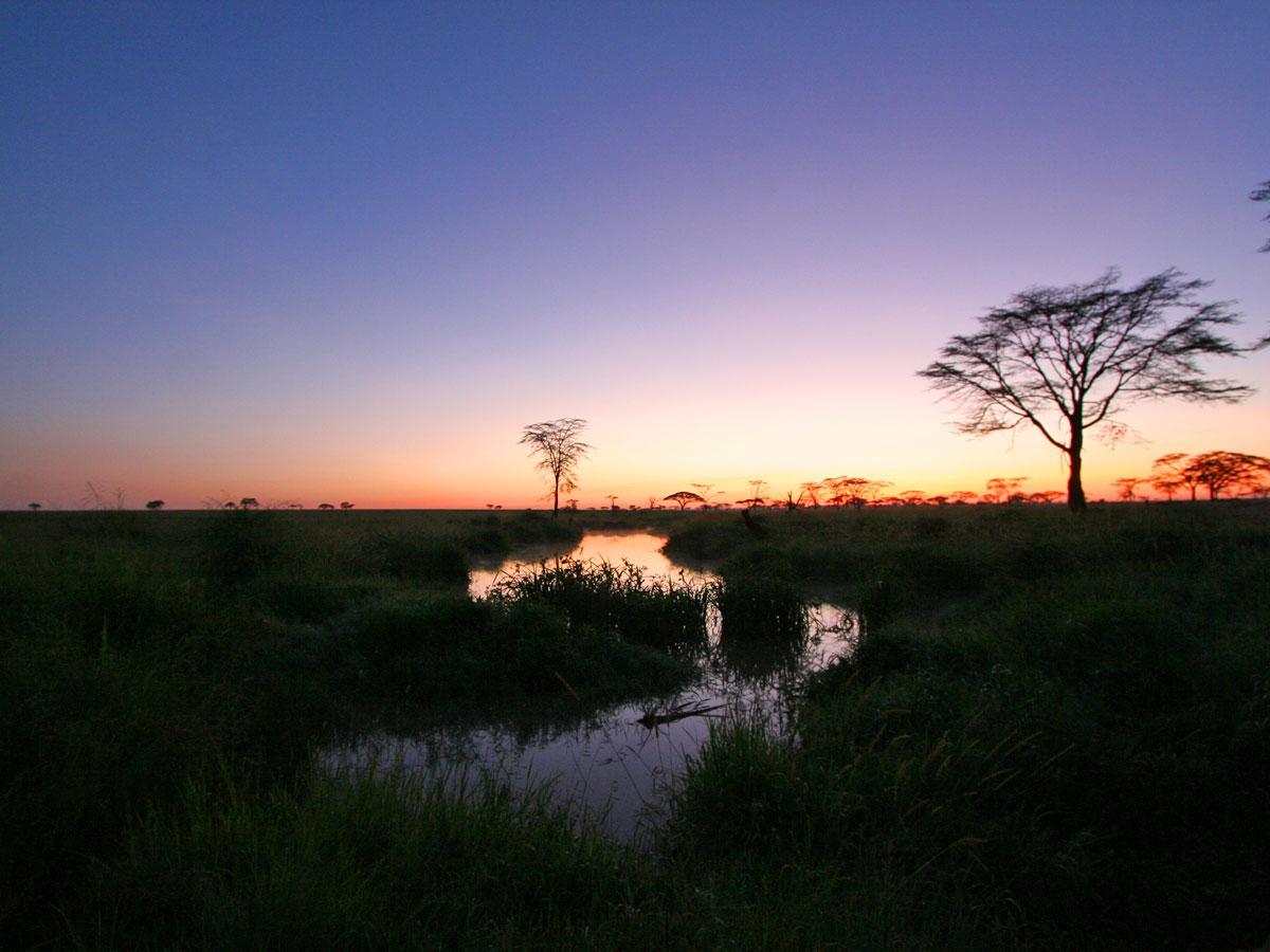 /wp-content/uploads/itineraries/Safari/safari-serengeti(7).jpg
