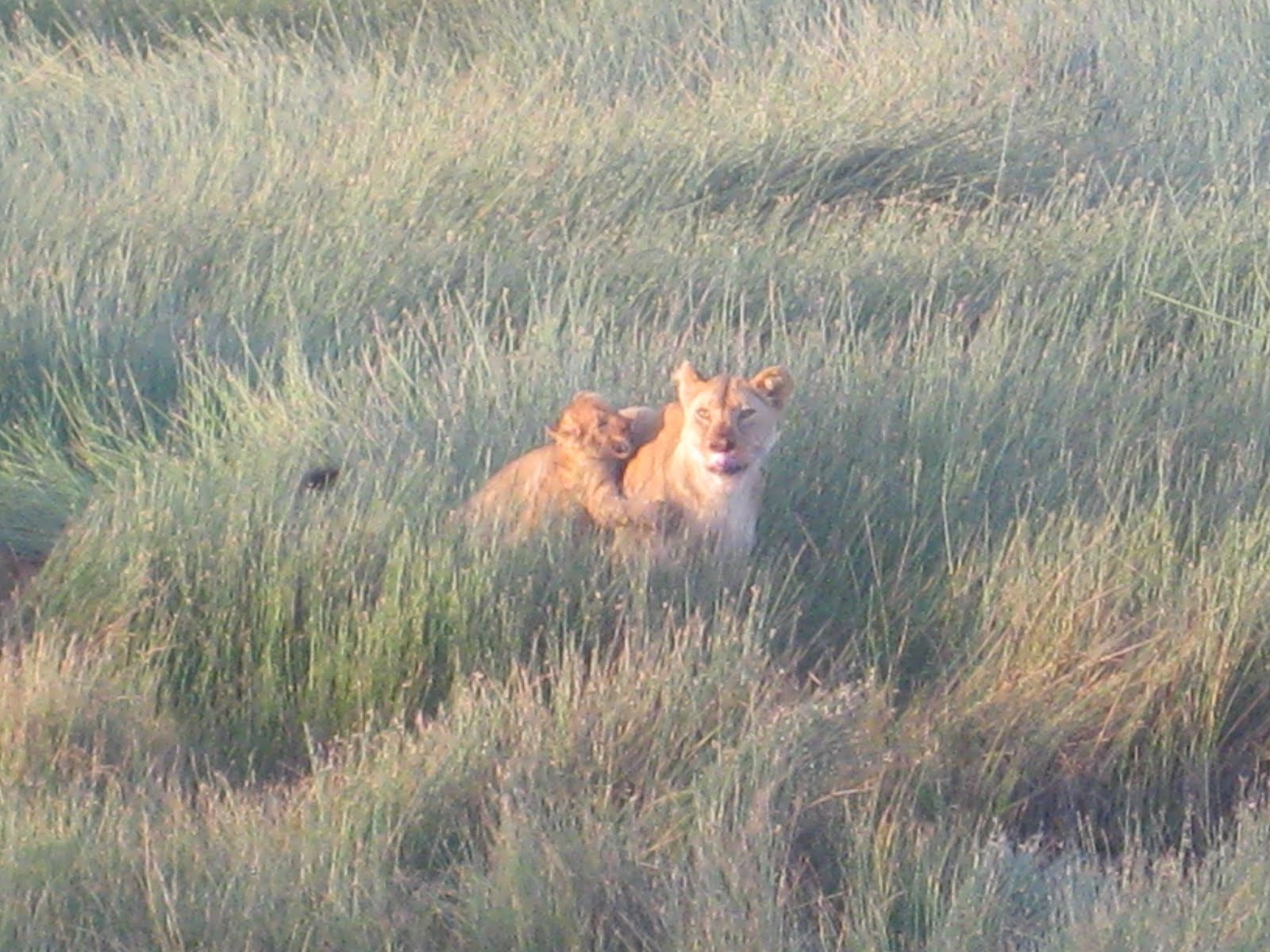 /wp-content/uploads/itineraries/Safari/safari-serengeti-migration.jpg