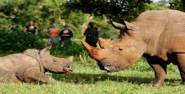 /wp-content/uploads/itineraries/Uganda/rhino_tracking.jpg