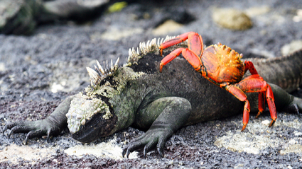 6-Day Galapagos Island Hopping