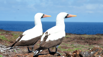4-Day Galapagos Island Hopping