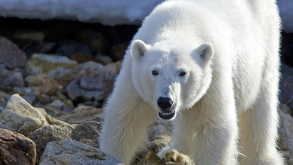 8-Day Spitsbergen: Polar Bears and More!