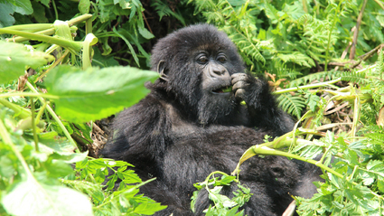 5-Day Fly In Bwindi Gorillas