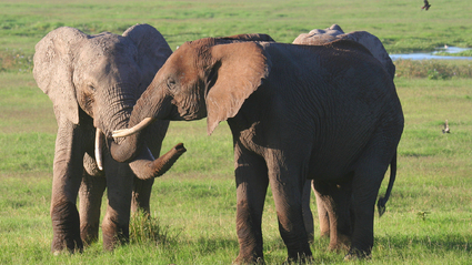 14-Day Safari with the Best of Kenya and Tanzania