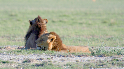 3-Day Kenya Safari to the famous Masai Mara