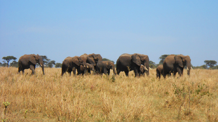 4-Day Selous National Park