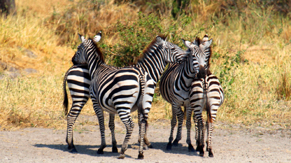 5-Day Safari to Selous and Ruaha National Parks