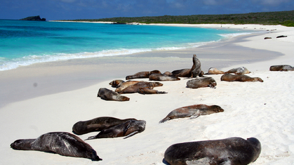 5-Day Galapagos Cruise
