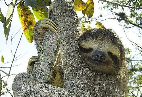 wp-content/uploads/itineraries/Brazil/manati-sloth-1.jpg