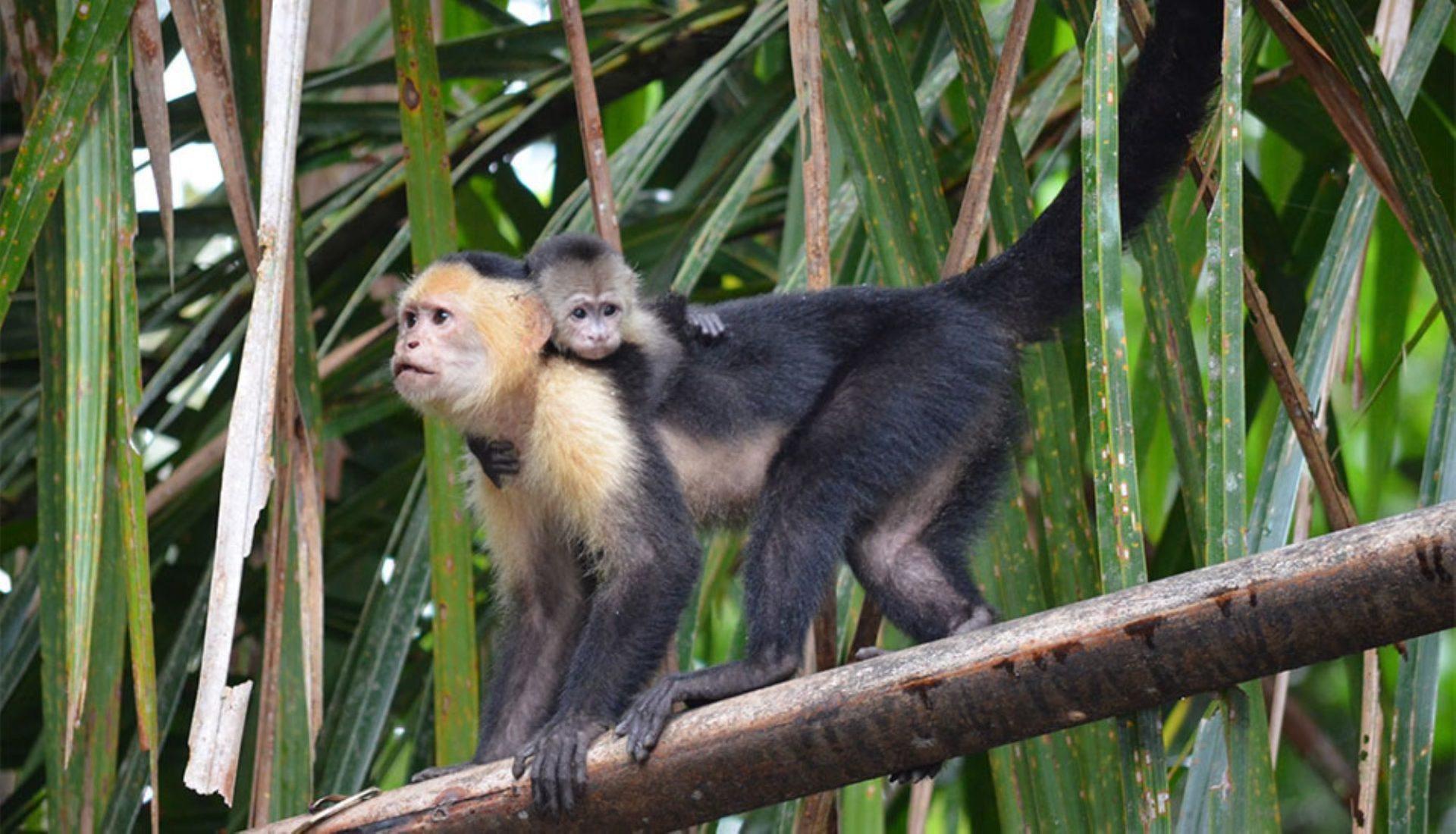 wp-content/uploads/itineraries/Costa-Rica/CRWildlifeDay7.jpg