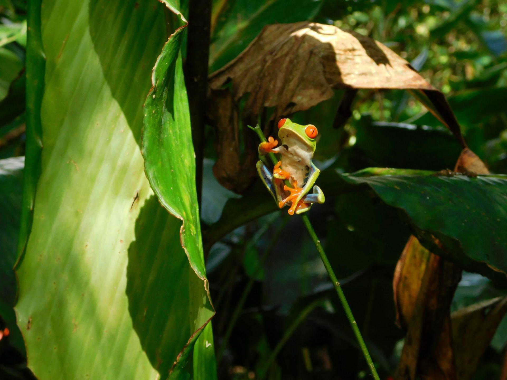wp-content/uploads/itineraries/Costa-Rica/CRWildlifeDay8.jpg
