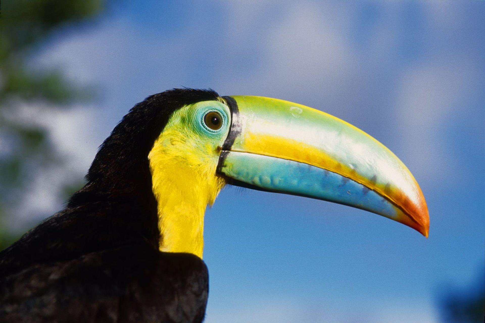 wp-content/uploads/itineraries/Costa-Rica/CRWildlifeDay9.jpg