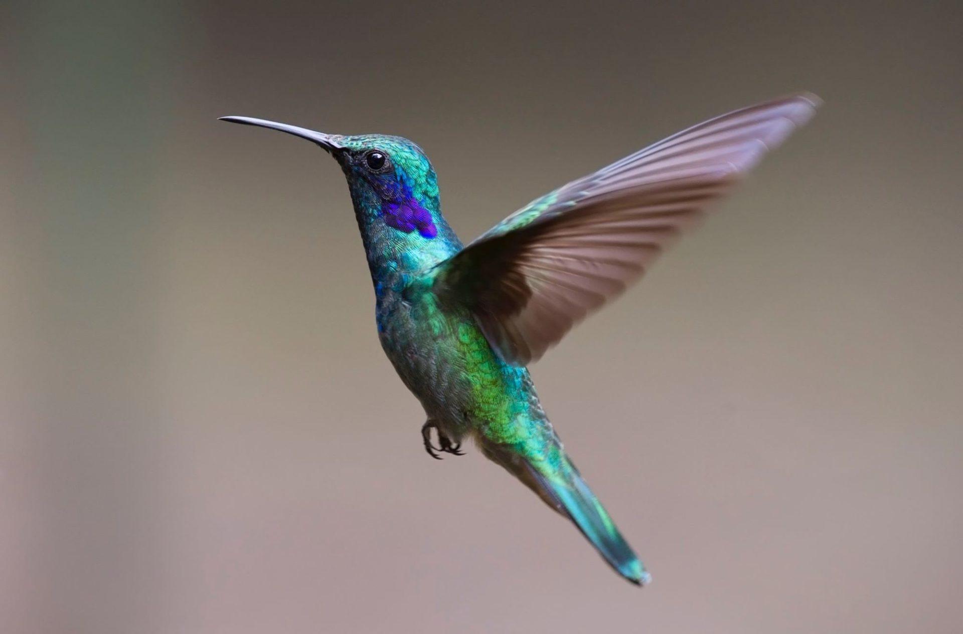 wp-content/uploads/itineraries/Costa-Rica/Day4OTGhummingbirdMonteverde.jpg