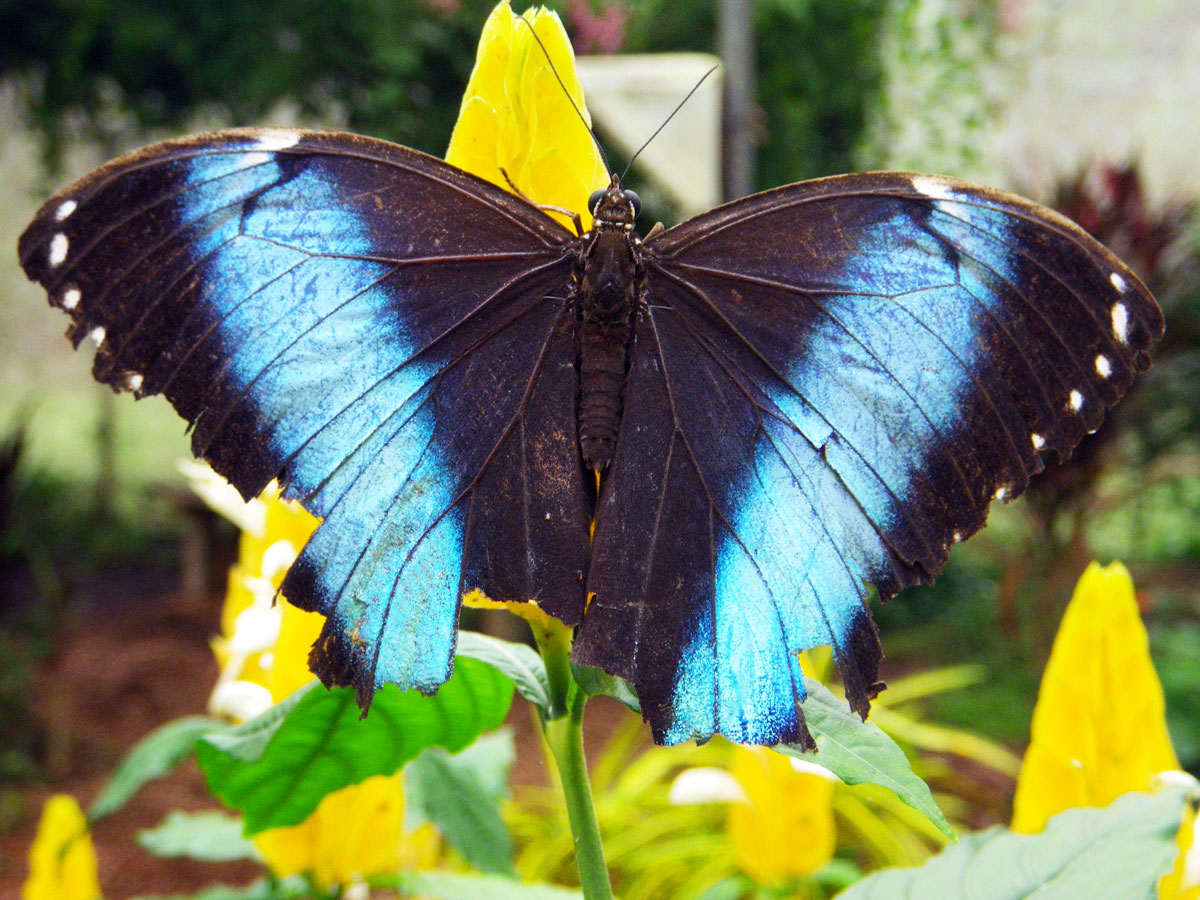 wp-content/uploads/itineraries/Ecuador/amazon-butterfly.jpg
