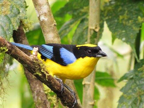 wp-content/uploads/itineraries/Ecuador/bellavista-bird-1.jpg