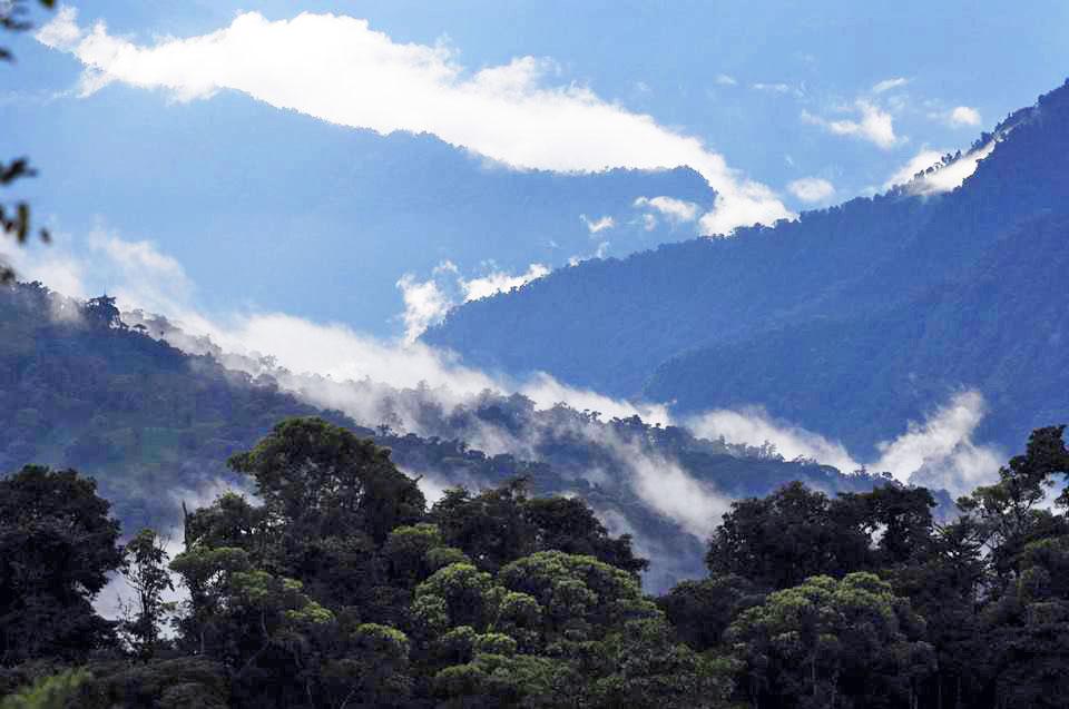 wp-content/uploads/itineraries/Ecuador/bellavista-forest-1.jpg