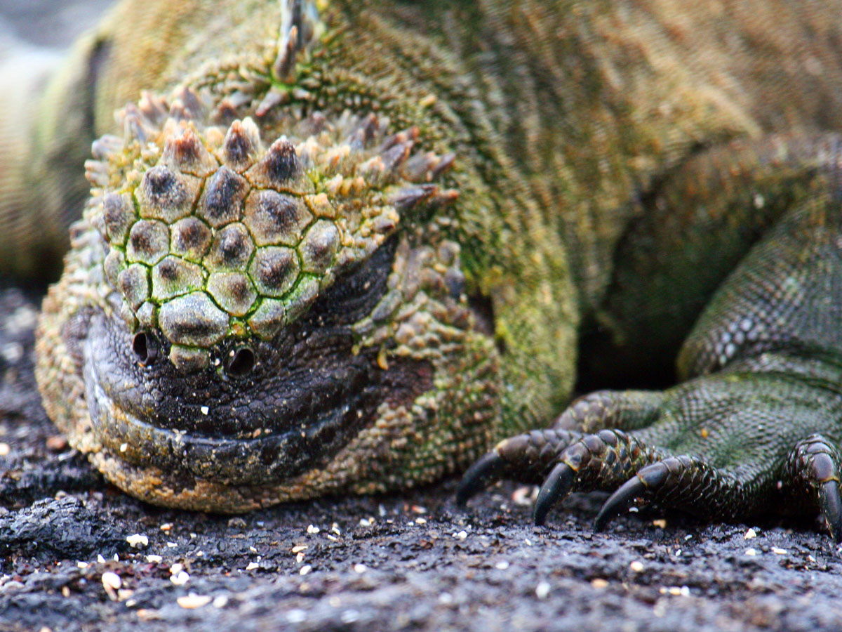 wp-content/uploads/itineraries/Galapagos/032310galapagos_espinosa_marineiguana.jpg