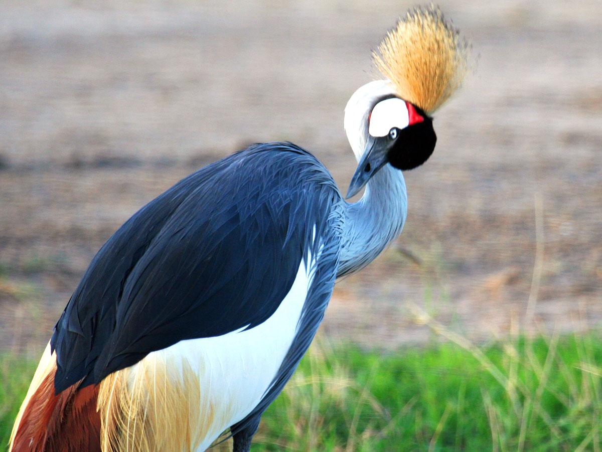 wp-content/uploads/itineraries/Kenya/amboseli_birds010208-(61).jpg