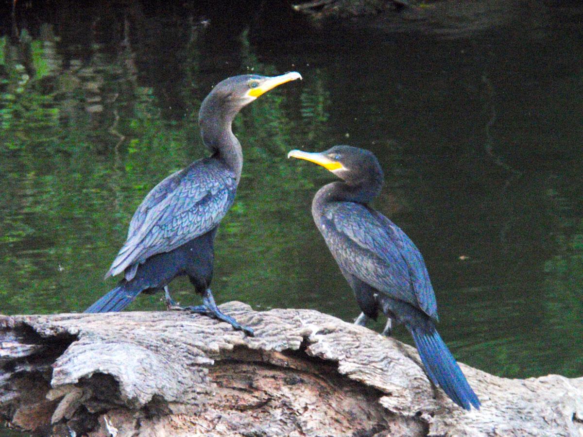 wp-content/uploads/itineraries/Peru/peru-amazon-bird-1.jpg