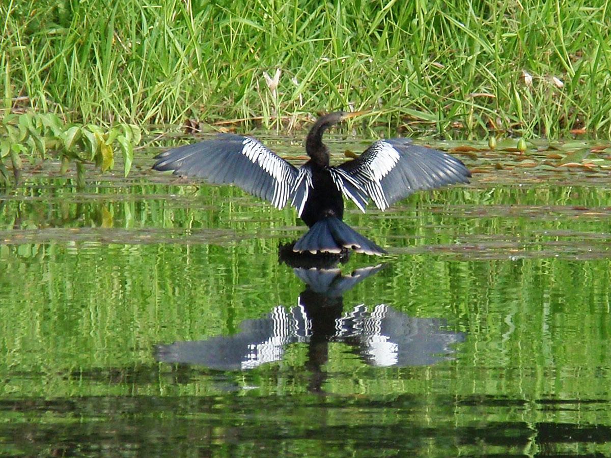 wp-content/uploads/itineraries/Peru/peru-amazon-bird-2.jpg