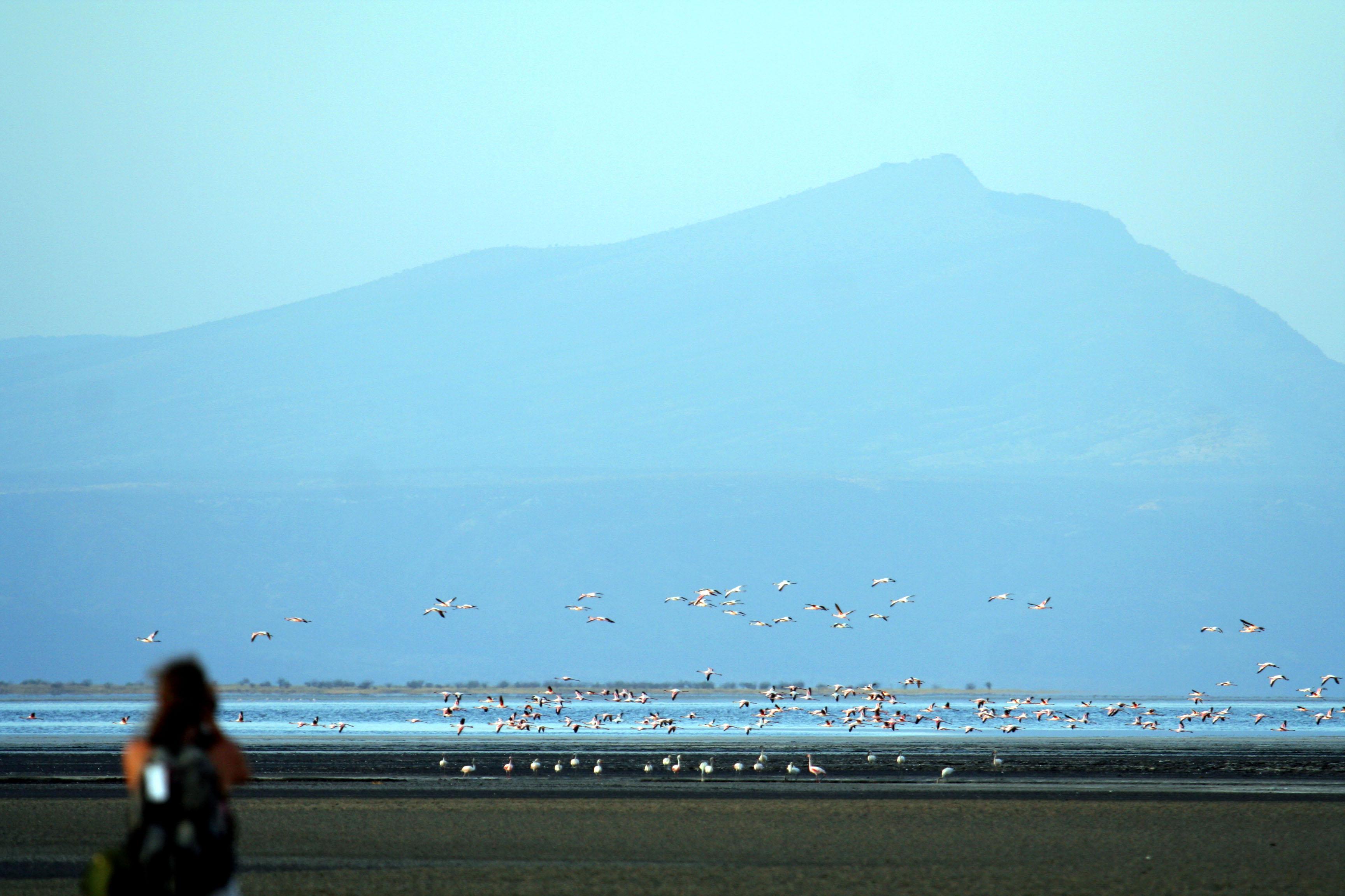 wp-content/uploads/itineraries/Safari/natron_lake_flamingo092506_3.jpg