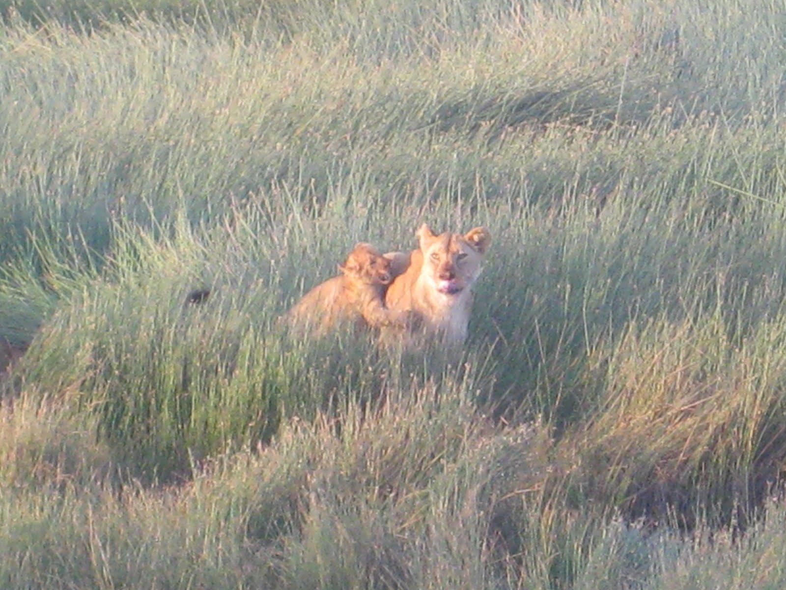 wp-content/uploads/itineraries/Safari/safari-serengeti-migration.jpg