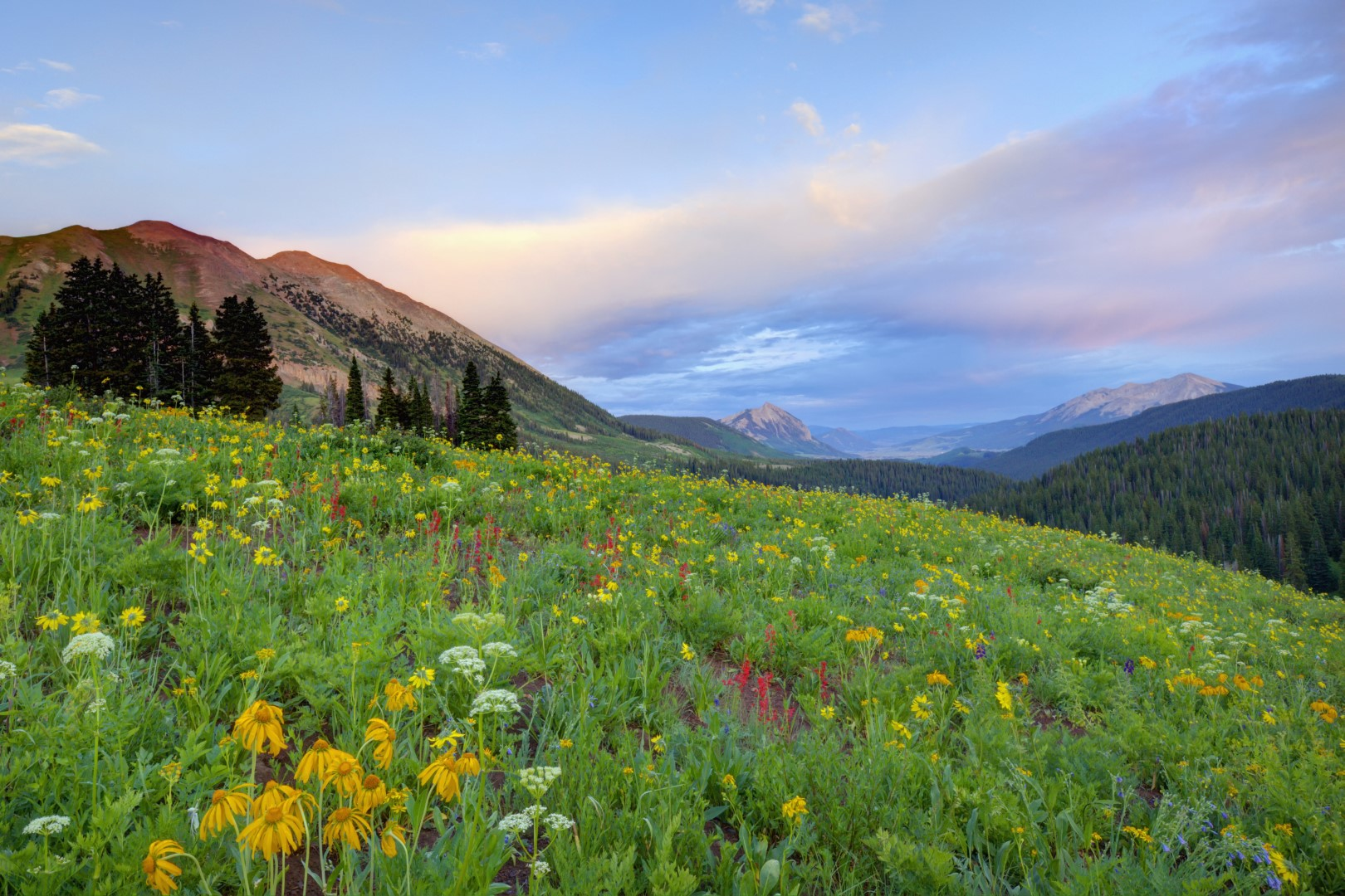 wp-content/uploads/itineraries/USA/CoMtn/crested-butte-flowers.jpg