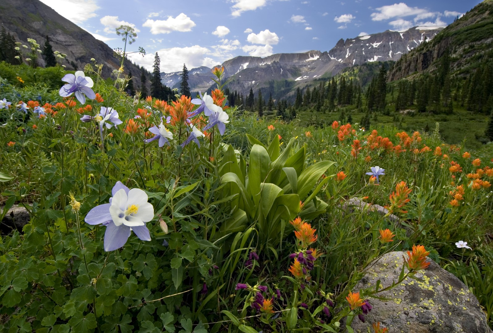 wp-content/uploads/itineraries/USA/CoMtn/ouray-flowers.jpg