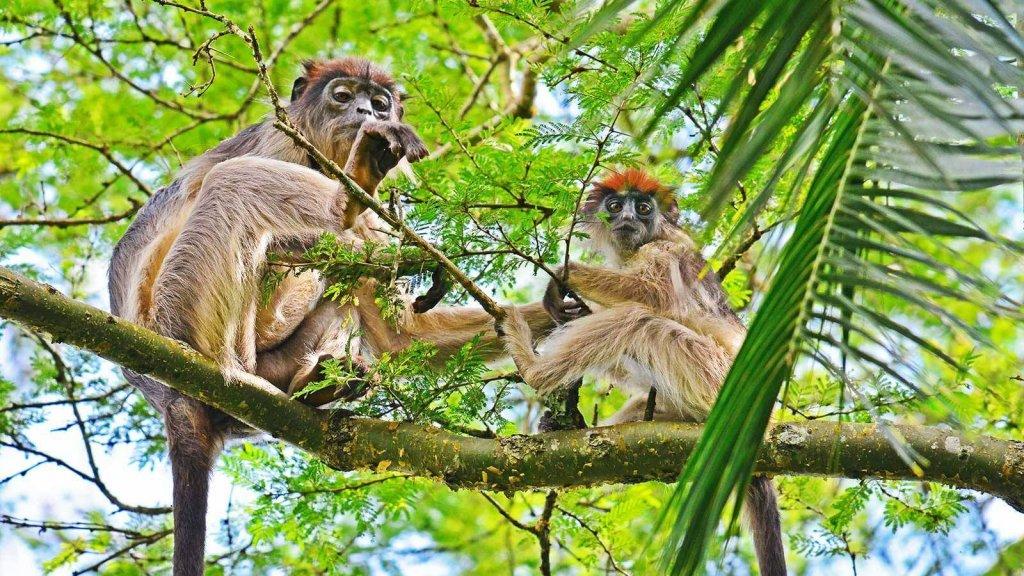 wp-content/uploads/lodging/Uganda/primate-lodge-kibale-red-colobus-1.jpg
